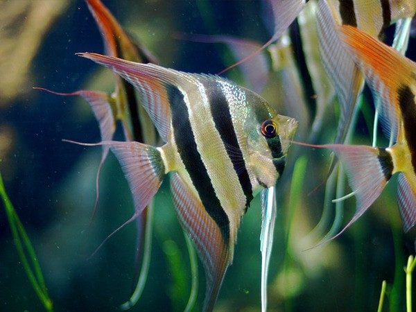 Where to buy angel fish for beginner pet fish aquariums for Where to buy pet fish